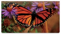 Click on Milkweed Butterfly Checkbook Cover For More Details