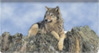 Click on Defenders of Wildlife Wolves Leather Checkbook Cover For More Details