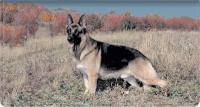 Click on Top Breeds - German Shepherd Leather Cover For More Details
